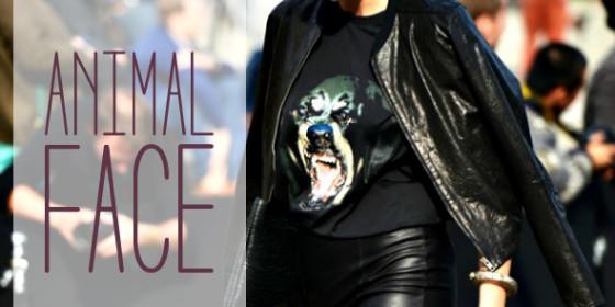 animal-face-560x280