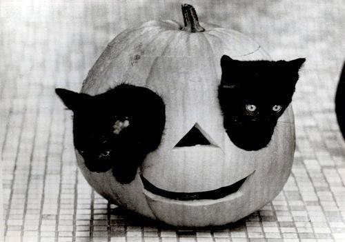 Pumpkin-cats
